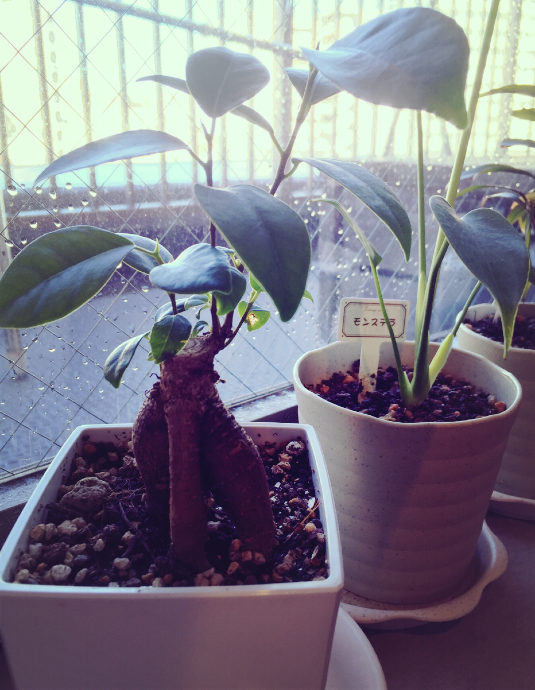 観葉植物&春色ブロッキングネイル