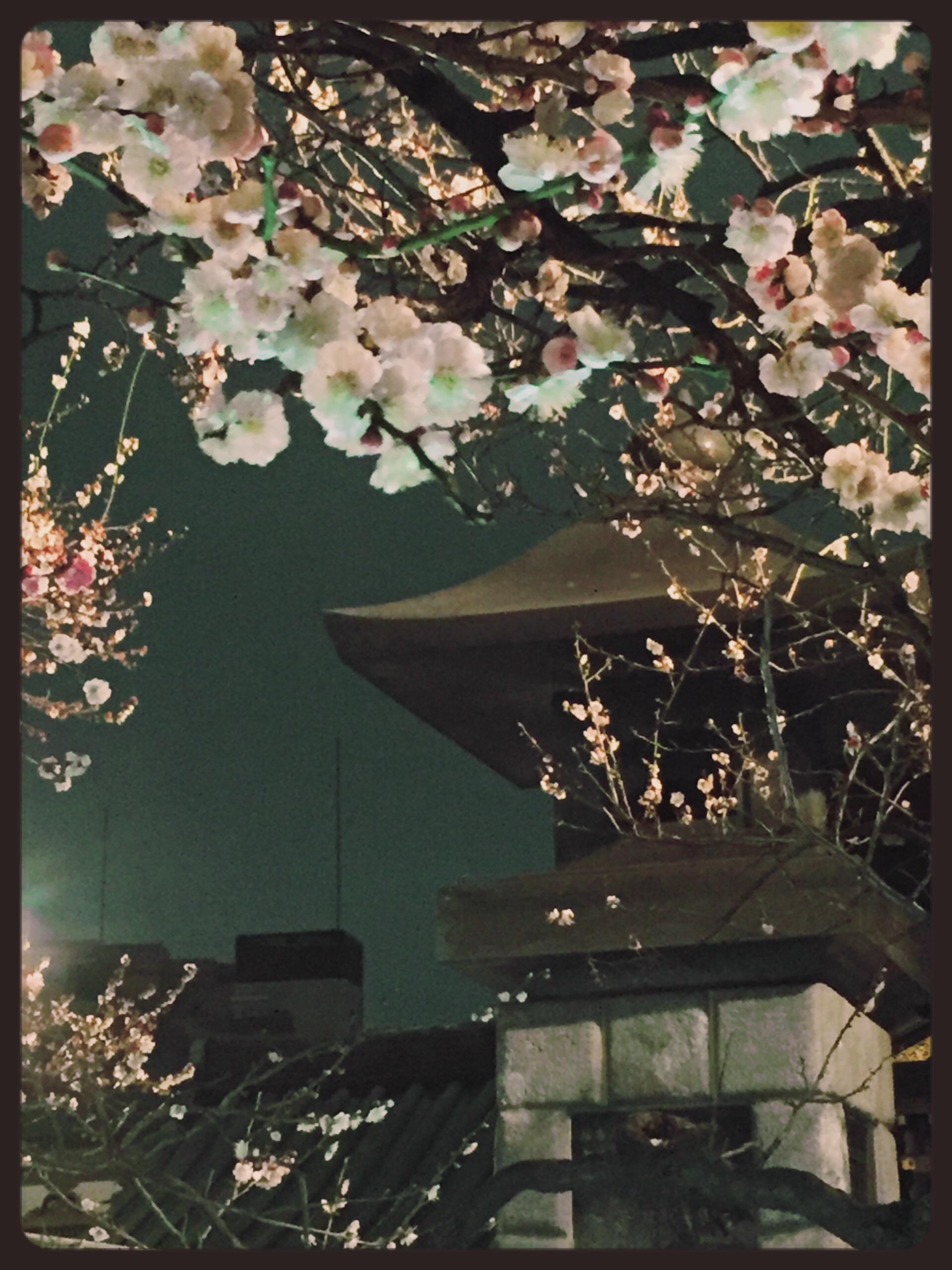 春の桜フットネイル♪